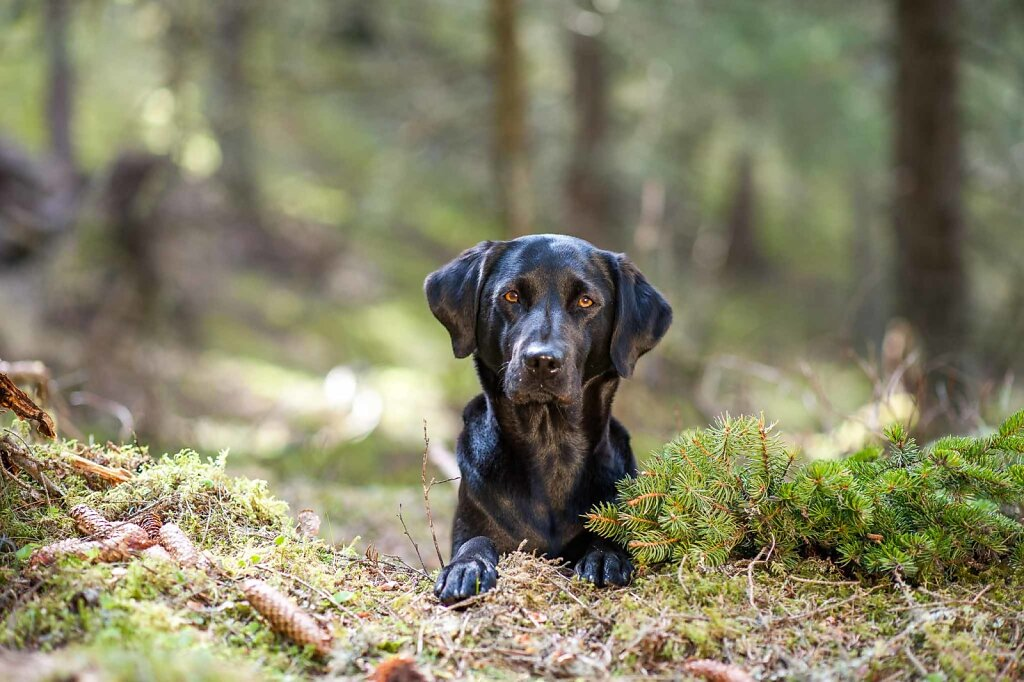2016-04-30-Ekspertbilder-skog-1063.jpg