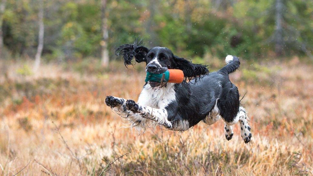 Flyvende hunder